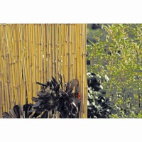 Canisse bambou vieilli 1 x 3 m