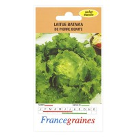 Laitue batavia batavia pierre benite france graines 3 g