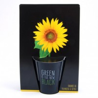 Kit de plantation black - tournesol